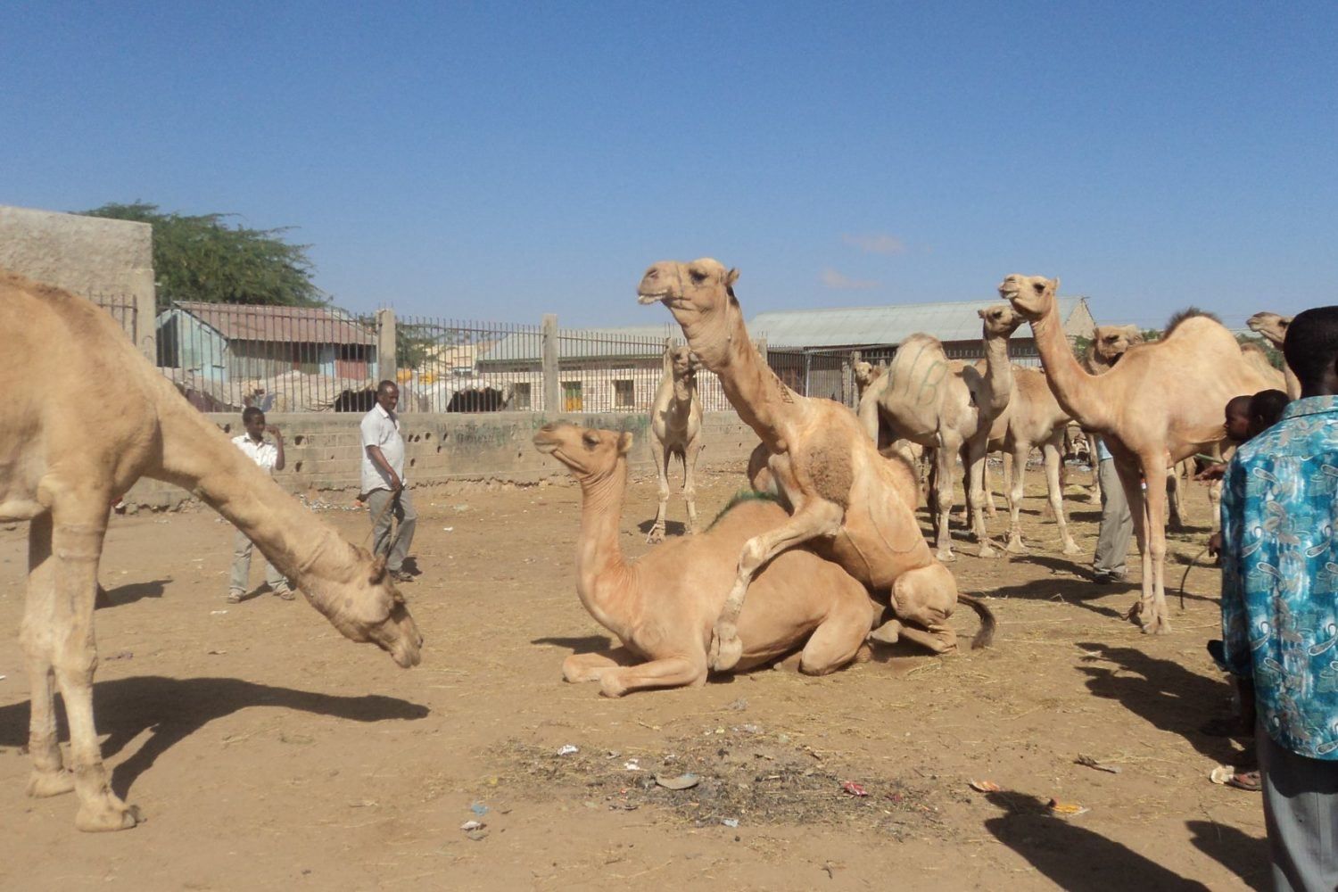What to see & do in Somaliland